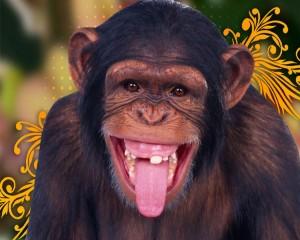 ¿Somos más tontos que los monos?