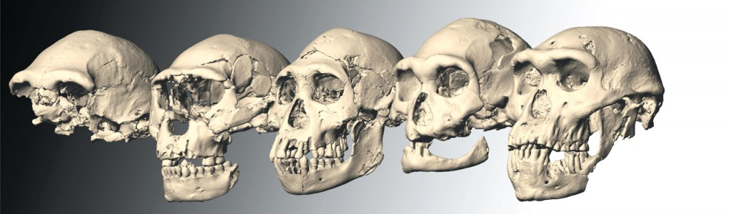 Dmanisi-skulls