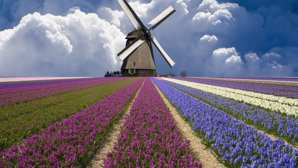 Windmill-and-fields-in-Netherlands