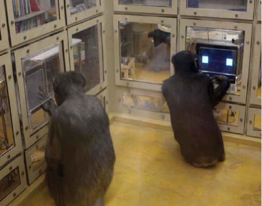 setup chimps