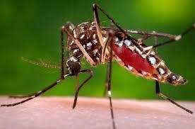 Las Olimpiadas de Brasil y el virus Zika